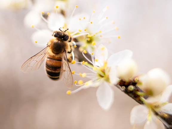 14 Tipps So Konnen Sie Bienen Helfen Eat Smarter