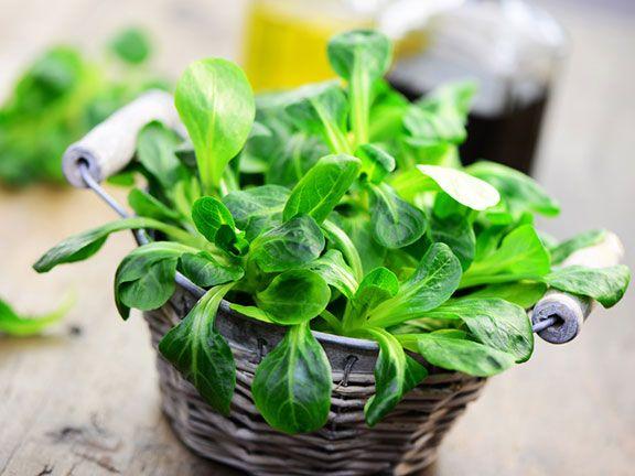 Nitratgehalt in Wintersalaten reduzieren