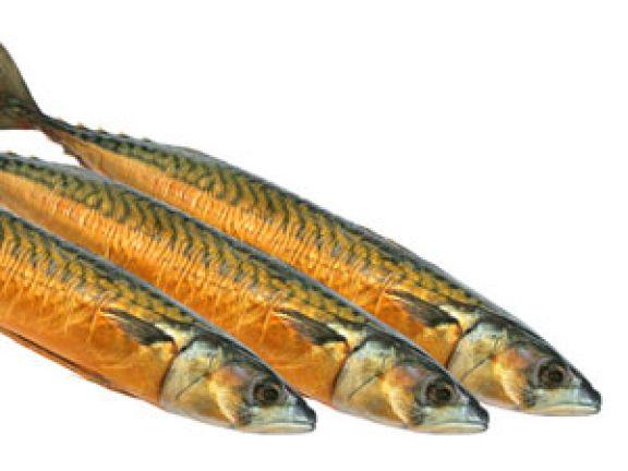 Fisch macht schlau