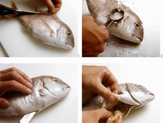 Fische vorbereiten