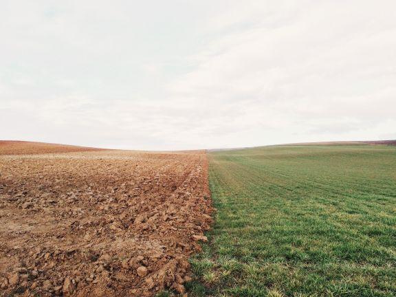 Folgen der Dürre