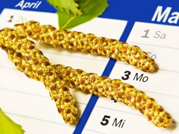 Birkenpollen und Allergiekalender