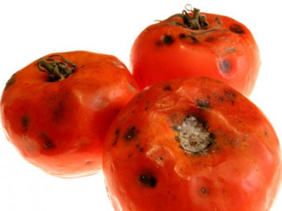 Müssen verschimmelte Lebensmittel in den Müll?