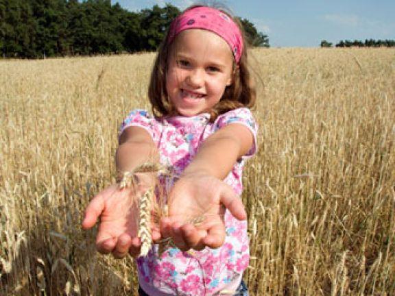 Vollkorn: gesundes Getreide