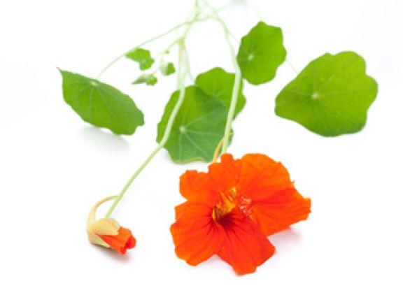 Kapuzinerkresse ist die Arzneipflanze des Jahres 2013