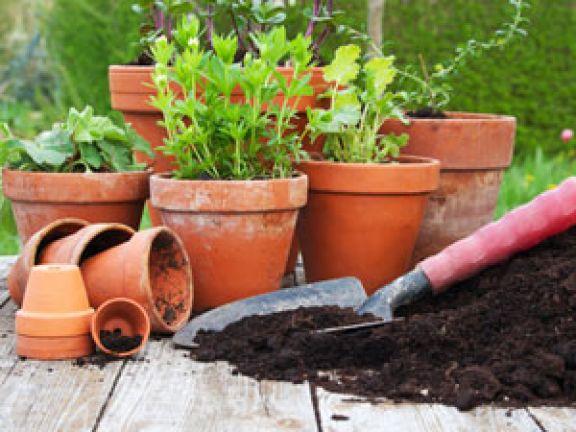 Kräuter anpflanzen leicht gemacht!