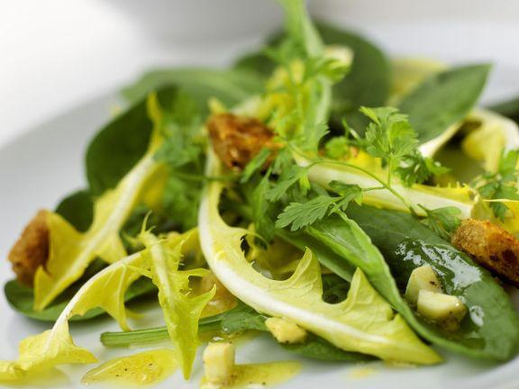 Salat aus Löwenzahn, Sauerampfer, Käse und Croutons