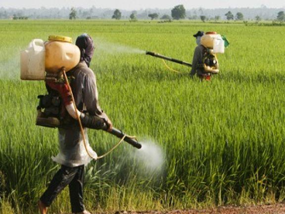 Weniger Schadstoffe bei Bio? © Tan Kian Khoon