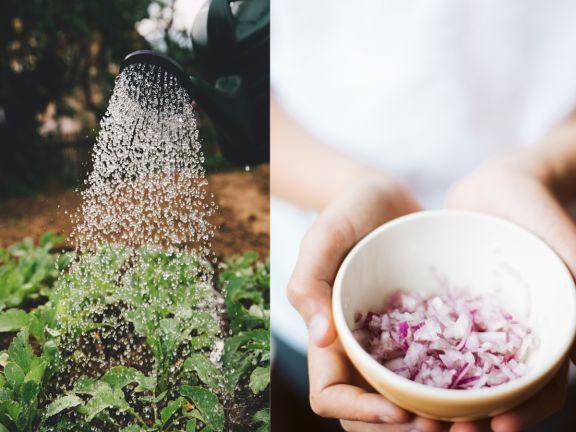 Schädlinge im Garten
