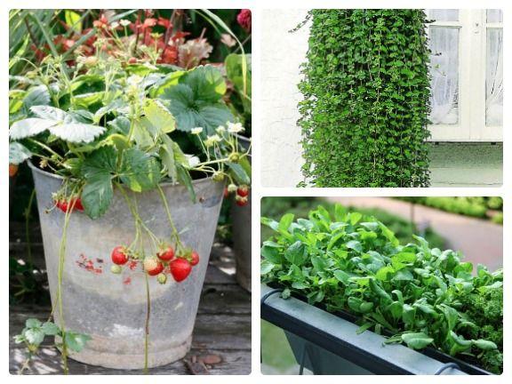 Die Besten Schattenpflanzen Fur Den Balkon Und Garten Eat Smarter