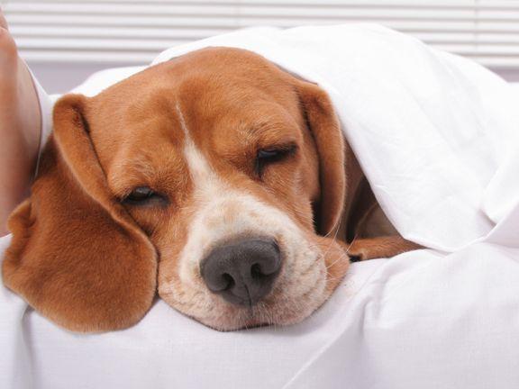 Stoffwechsel anregen durch Schlaf