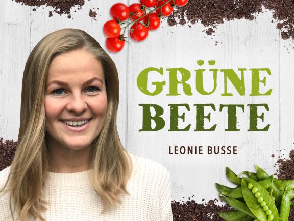Grüne Beete Gartenblog