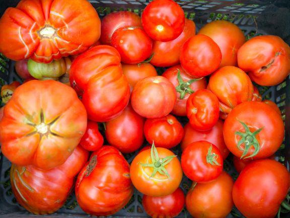 Tomaten Poletto