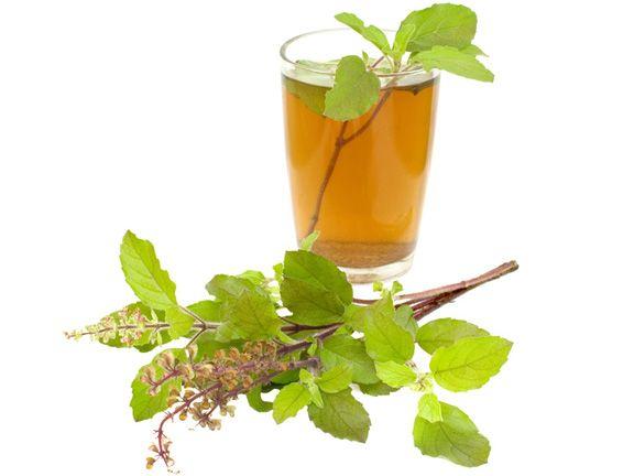Tulsi und Teetasse mit Tulsi-Tee