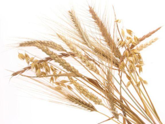 Weizen, Dinkel und Grünkern
