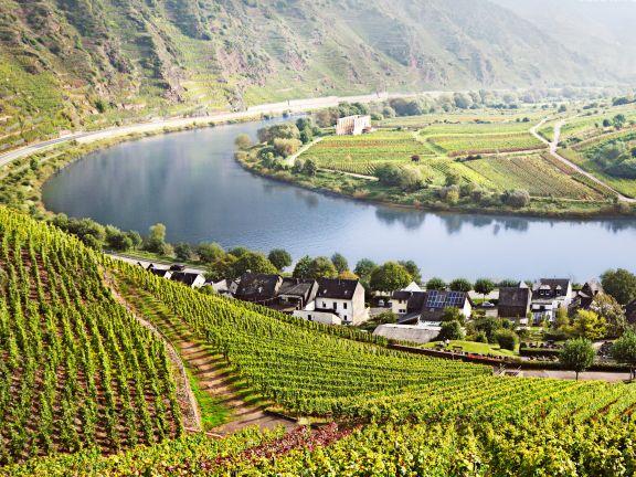Natur und Genuss mit einer Weinwanderung verbinden