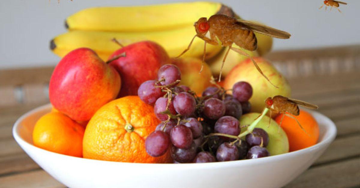 Fruchtfliegen Vertreiben Eat Smarter