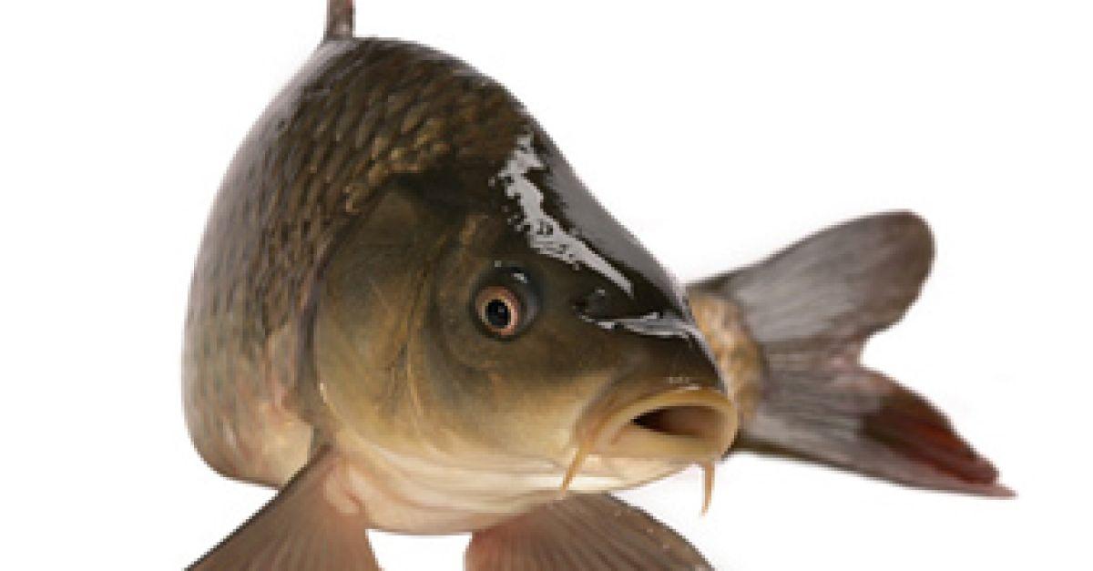 jetzt haben s wasserfische saison eat smarter