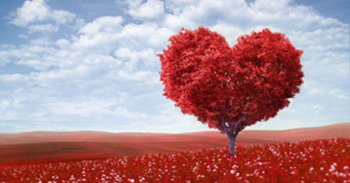 Valentinstagsgeschenke: Last-Minute-Ideen
