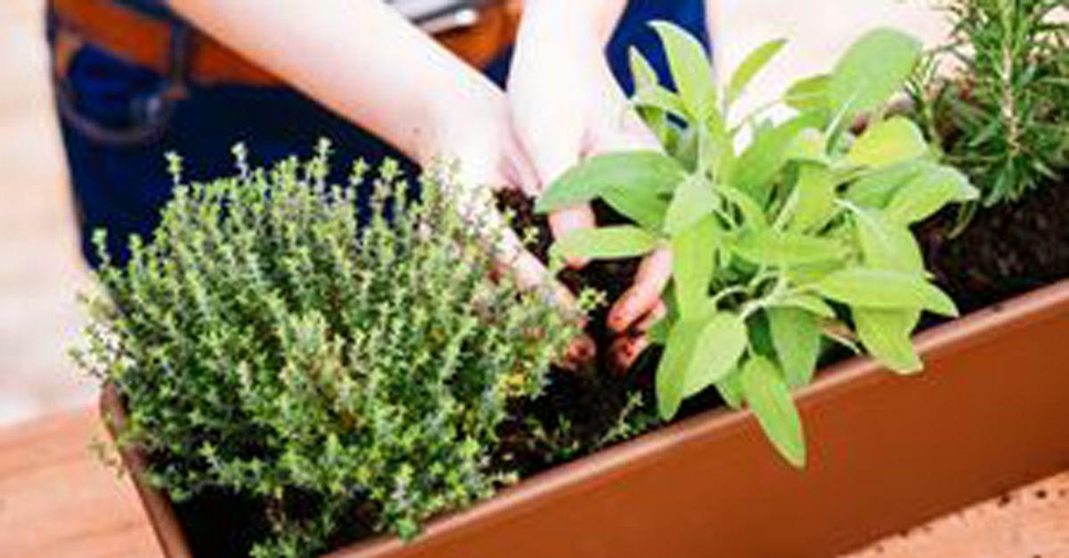 die besten schattenpflanzen f r den balkon und garten eat smarter. Black Bedroom Furniture Sets. Home Design Ideas