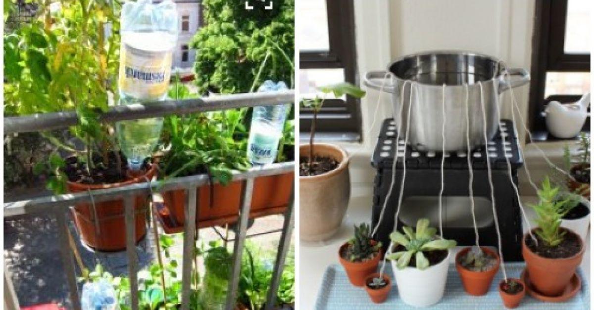 blumen und pflanzen automatisch bew ssern eat smarter. Black Bedroom Furniture Sets. Home Design Ideas