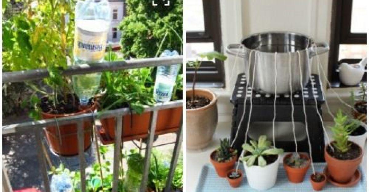 Blumen Gießen Urlaub blumen und pflanzen automatisch bewässern eat smarter
