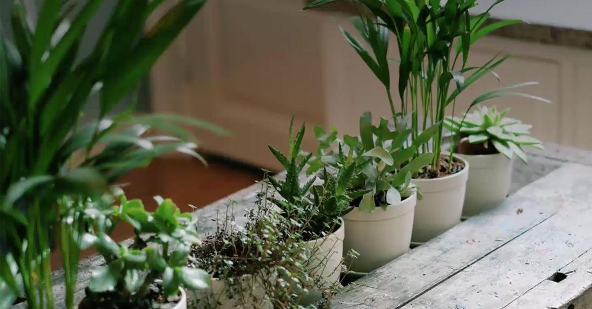 5 Pflanzen Fur Ein Gutes Raumklima Eat Smarter