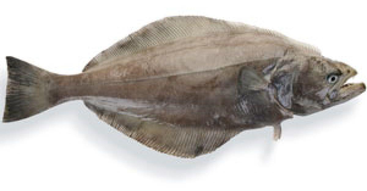 Es gibt viele Fische im Meer Dating Daten-Websites pof