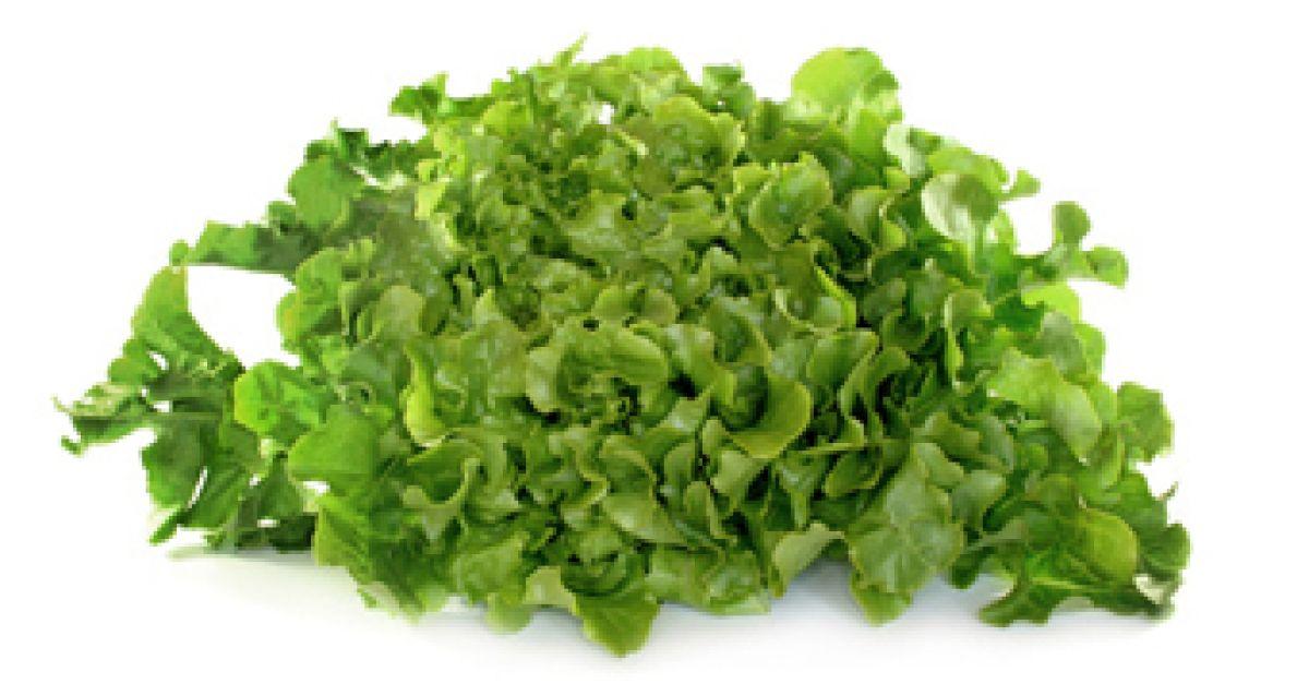 Salatsorten Auf Einen Blick Eat Smarter
