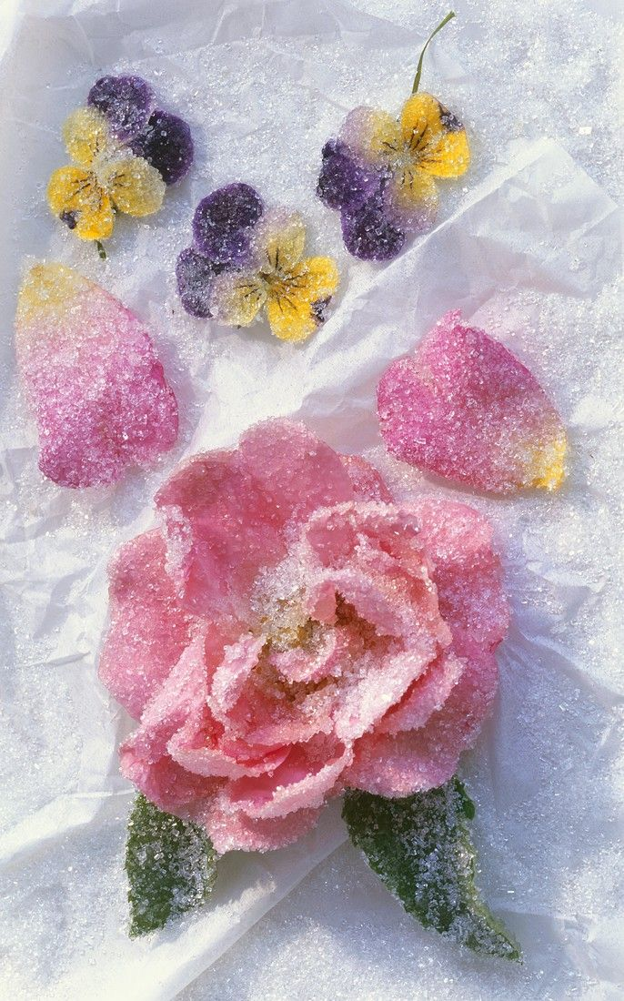 Gezuckerte Rosenblüte und gezuckerte Stiefmütterchen Rezept | EAT ...