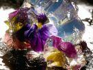Blüten in Aspik Rezept