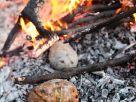 Kartoffeln aus der Glut Rezept