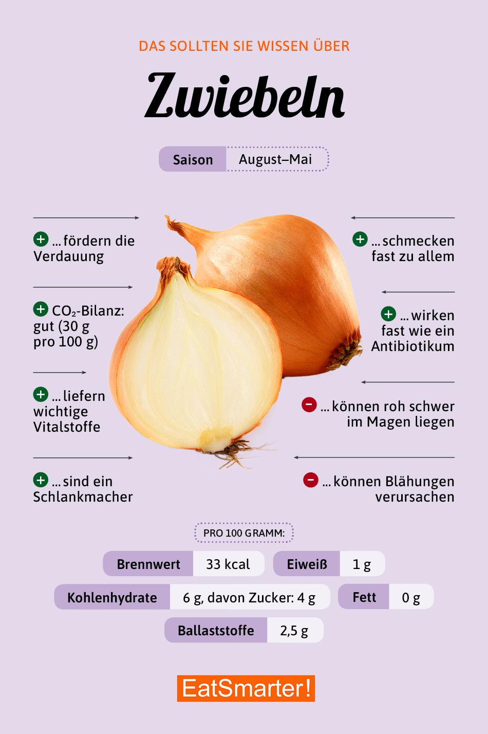 Warenkunde Zwiebeln Infografik